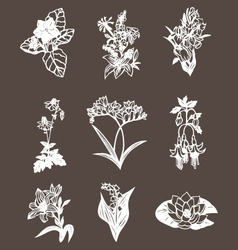 Hand drawn flower design elements vector