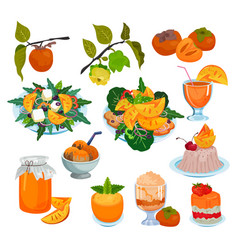 persimmon fresh fruity food salad dessert vector image