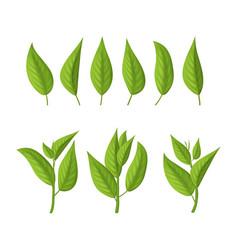 realistic 3d detailed green tea leaves set vector image