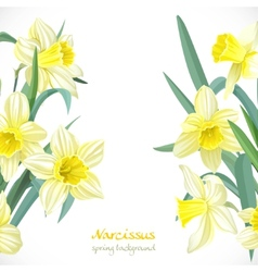 Yellow narcissus spring background vector image