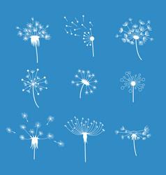 dandelion fluffy flower and seeds set vector image vector image