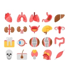 flat style Medical Icons with human organs vector image