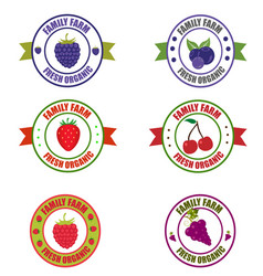fruit logo vector image