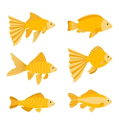 Goldfish set isolated on white background Yellow vector image