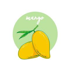 mango fruit hand drawn vector image