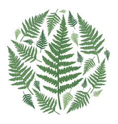 round frame with green fern leaves vector image