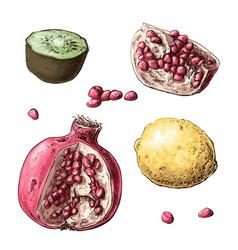 set fruits lemon garnet kiwi vector image