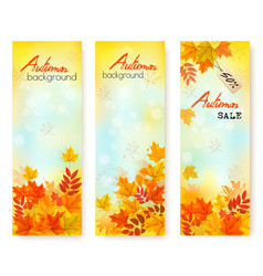 three autumn sale banners with colorful leaves vector image