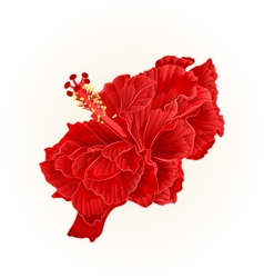 Red hibiscus corrugated simple tropical flower vector image vector image