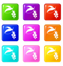 Currant berries icons 9 set vector