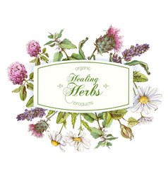 herbal frame vector image