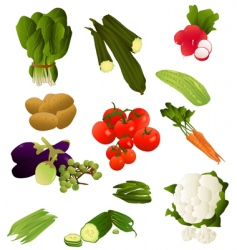 indian vegetables vector image