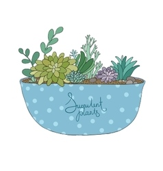 Succulents in pot agave aloe and cactus vector