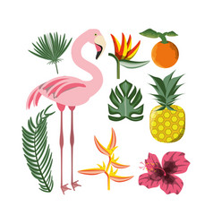 beautiful set icon with exotic flamingo and vector image