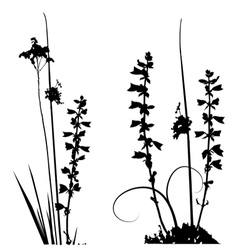 wild plants and flower silhouettes vector image vector image