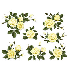 yellow rose boutonniere set vector image