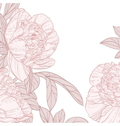 Beautiful peonies line art background vector image