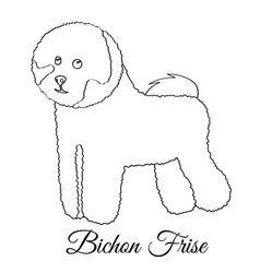 Bichon frise dog coloring vector