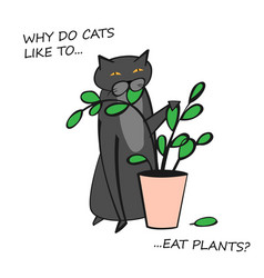 Cat behavior image vector