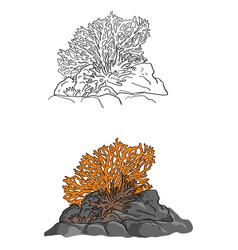 coral sketch doodle hand drawn vector image