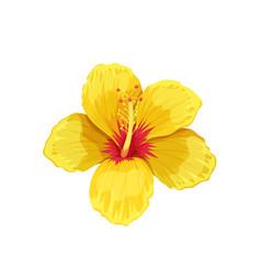 Hibiscus tropical flower vector