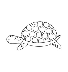 Isolated object tortoise and maori icon set of vector