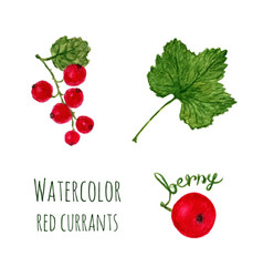 watercolor with branch of red currant leaf and vector image