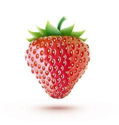 fresh strawberry vector image