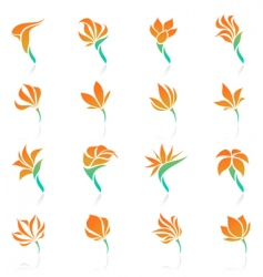 tropical flowers elements for design vector image vector image