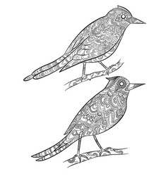 Birds coloring pages flying wild canary with vector