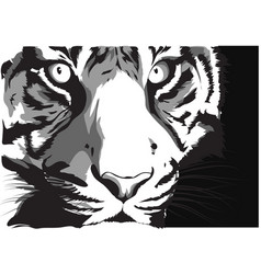 black and white sketch of a tiger s face vector image