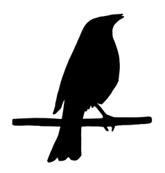 High quality Silhouette of a bird on branch vector image
