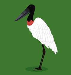 Jabiru stork cartoon bird vector