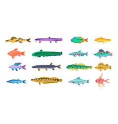 Sea and freshwater fishes with bright scales vector