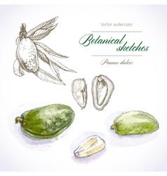 Botanical sketches vector