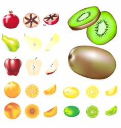 Delicious fruits vector
