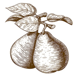 engraving pear vector image
