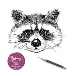 hand drawn sketch raccoon head isolated cute vector image