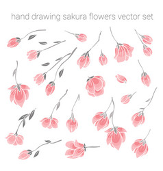 Large set of delicate pink sakura cherry flowers vector
