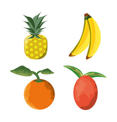set icon concept related with tropical fruits vector image