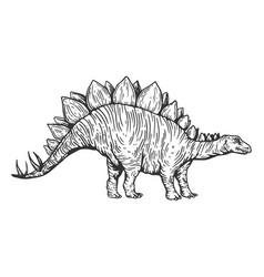 Stegosaurus dinosaur engraving vector