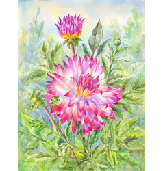 watercolor dahlia in flowering garden summer vector image