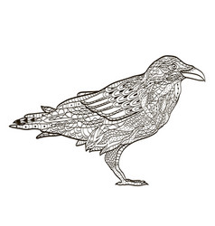 bird raven coloring book for adults vector image