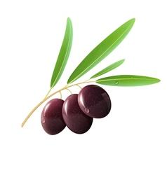 Black olives vector