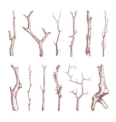 hand drawn wood twigs wooden sticks tree vector image vector image