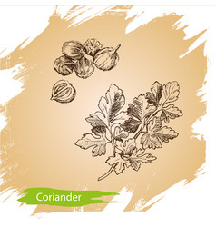 Background sketch the herbs and spice vector
