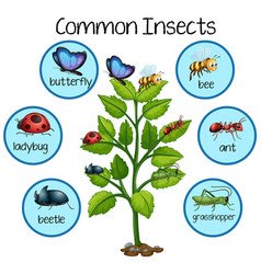 Common insect on plant vector
