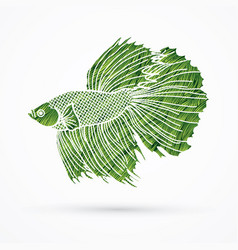 green siamese fighting fish graphic vector image