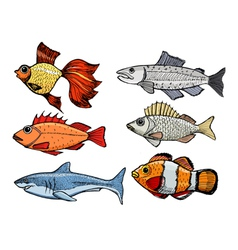 kinds of the fishes vector image