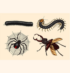 big set insects vintage pets in house julida vector image